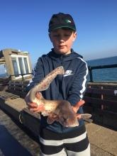 Deal, Kent - Dog-fish